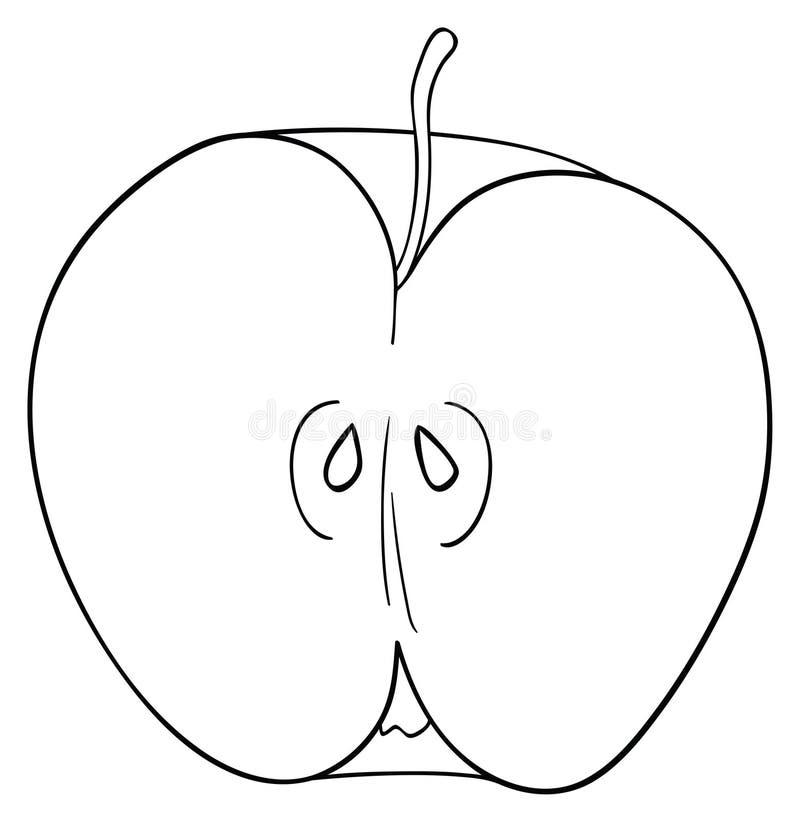 Verrukkelijke tuin - de Helft van gesneden appel met een stam en zaden royalty-vrije illustratie