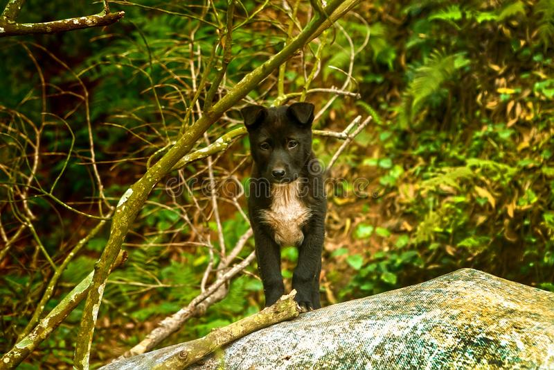 Verry ο χαριτωμένος σκυλιών κουταβιών στέκεται στο δασικό θηλαστικό Σκυλί pet Πορτρέτο οσφρητικός Λύκος Canis αποφλοιώνοντας σκυλ στοκ φωτογραφία με δικαίωμα ελεύθερης χρήσης