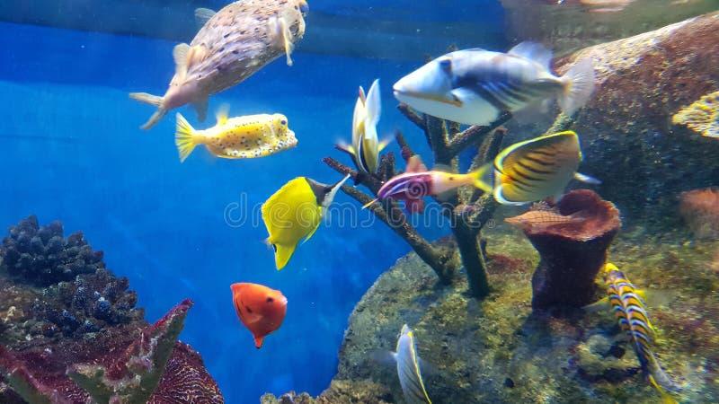 Verry schönes des Aquariums stockbilder
