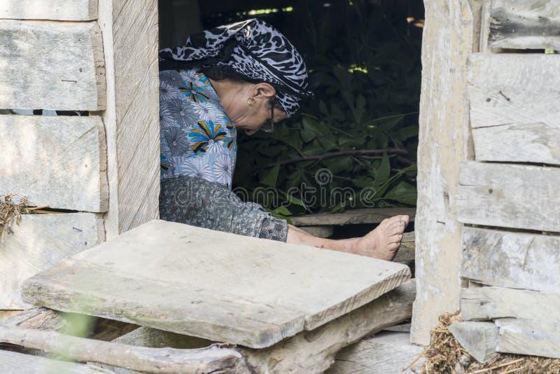 Vers à soie de alimentation de femme musulmane par des feuilles à l'intérieur d'entrepôt en bois images libres de droits