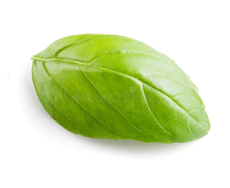 Vers Basil Leaf On White Background stock fotografie