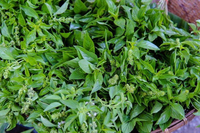 Vers basilicum, Groen basilicum, organische groente, stapel van basilicum stock afbeeldingen
