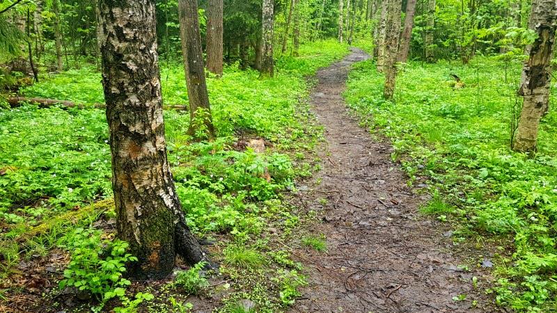 Vers bos stock afbeeldingen