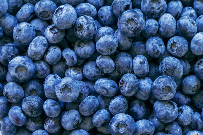 Vers bosbessenfruit royalty-vrije stock afbeelding
