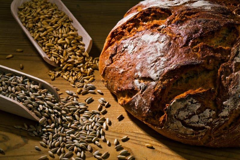 Vers broodbrood stock afbeelding