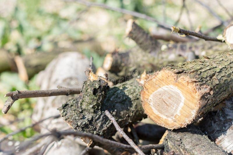 Vers cutted brandhout in de stapel stock fotografie