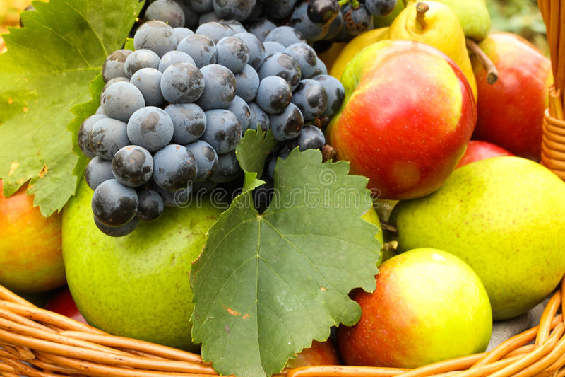 Vers de herfstfruit stock fotografie