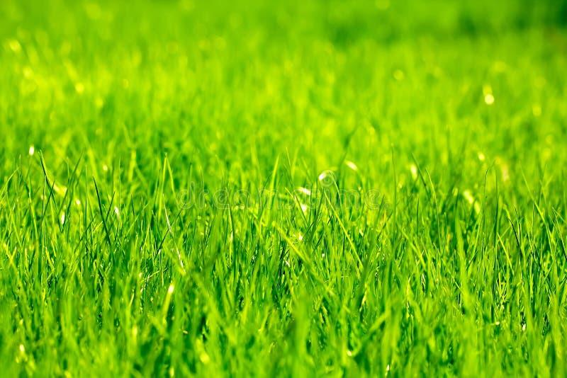vers de lente groen gras stock afbeelding afbeelding bestaande uit gras 40514725. Black Bedroom Furniture Sets. Home Design Ideas