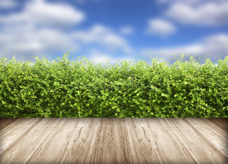 Vers de lente groen gras met blauwe hemel stock foto's