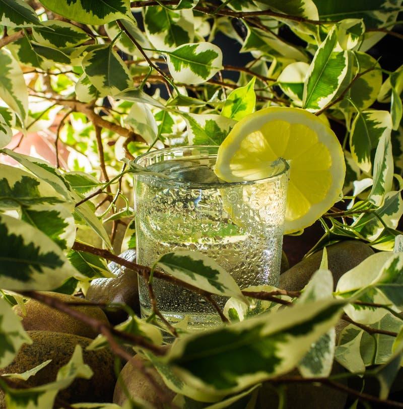 Vers duidelijk water met zoet waterzon stock foto