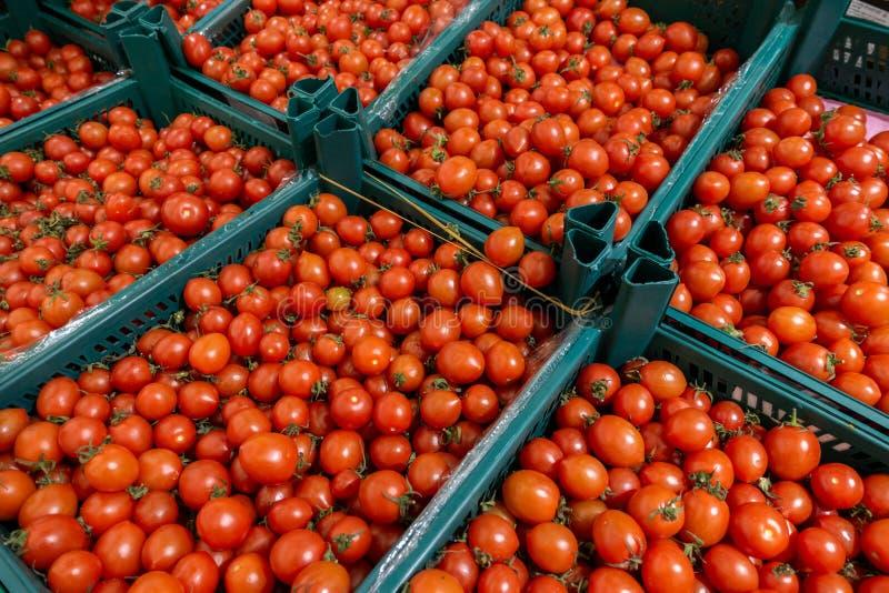 Vers geoogste tomaten op landbouwbedrijfmarkt stock afbeelding