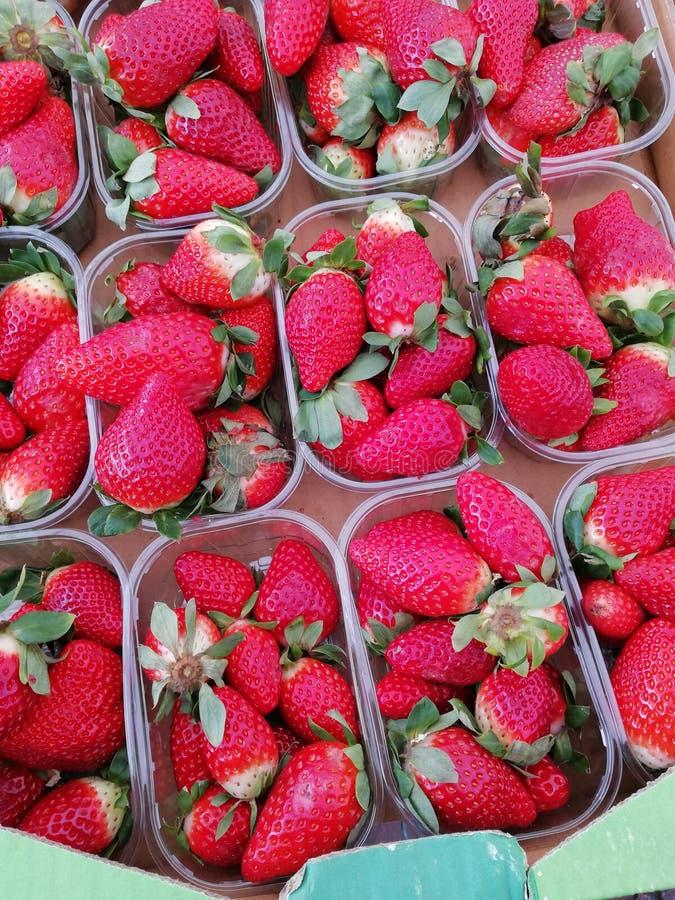 Vers geplukte grote aardbeien in de manden royalty-vrije stock fotografie