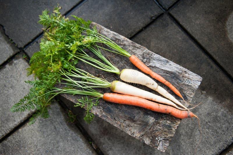 Vers geplukte oranje en witte wortelen, pastinaken stock afbeelding