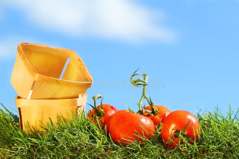 Vers geplukte tomaten stock foto's