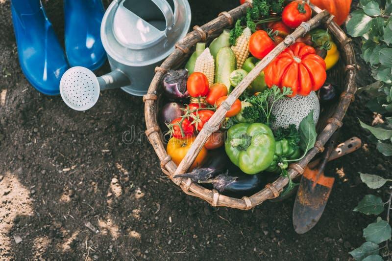 Vers geplukte tomaten, peper, graan, aubergine en courgette stock afbeelding