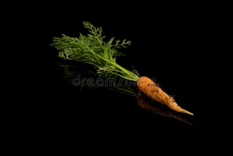 Vers geplukte wortel stock fotografie
