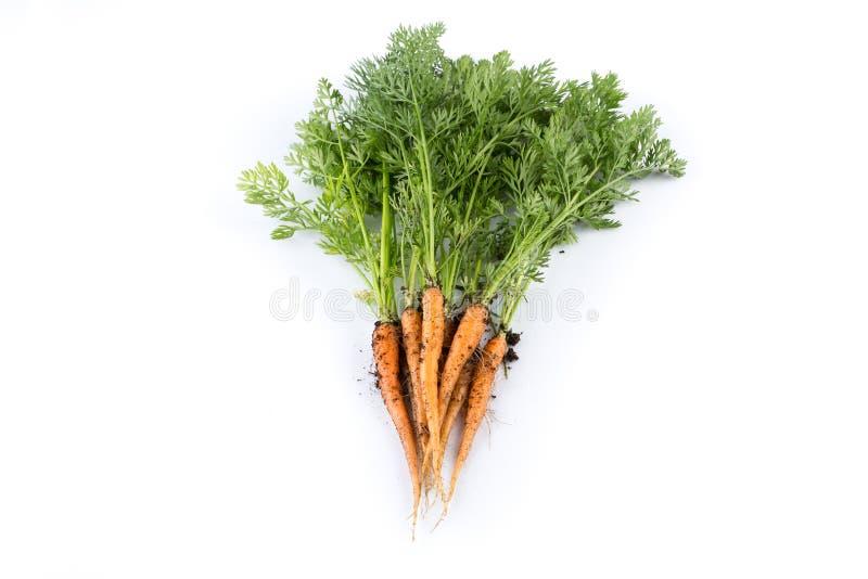 Vers geplukte wortelen royalty-vrije stock afbeelding