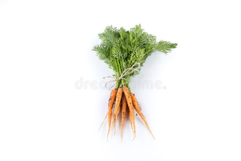 Vers geplukte wortelen royalty-vrije stock foto