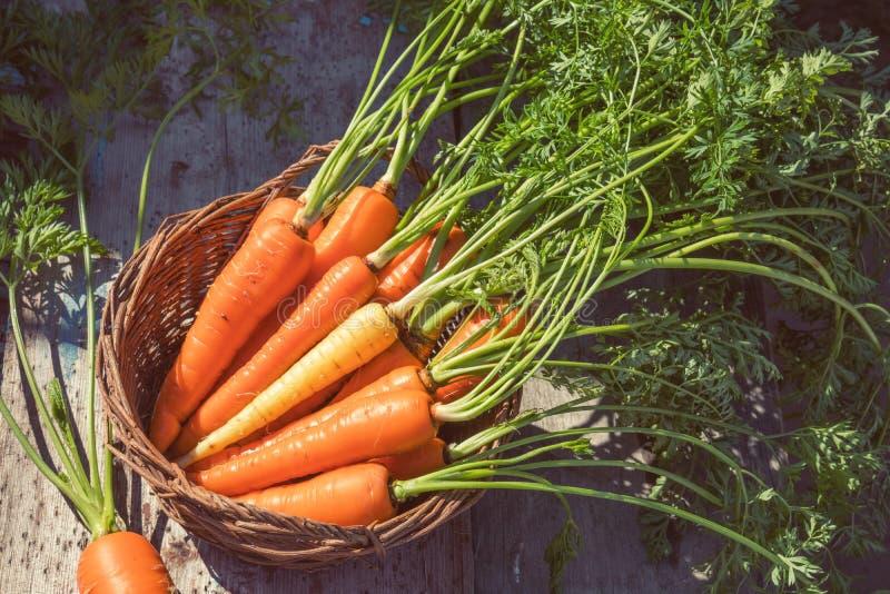 Vers geplukte wortelen in een mand stock foto