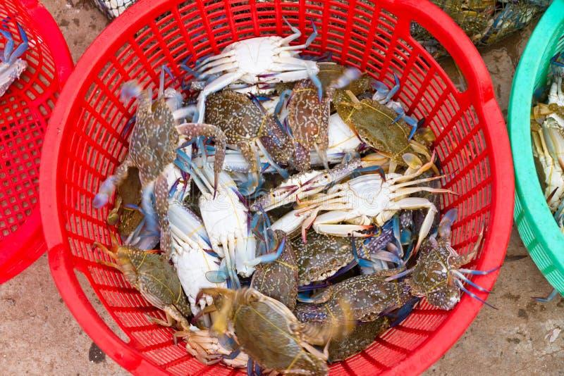 Vers gevangen blauwe krabben, Vietnam royalty-vrije stock foto's