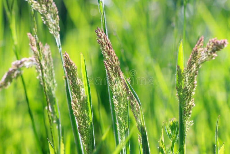 Vers Gras stock fotografie