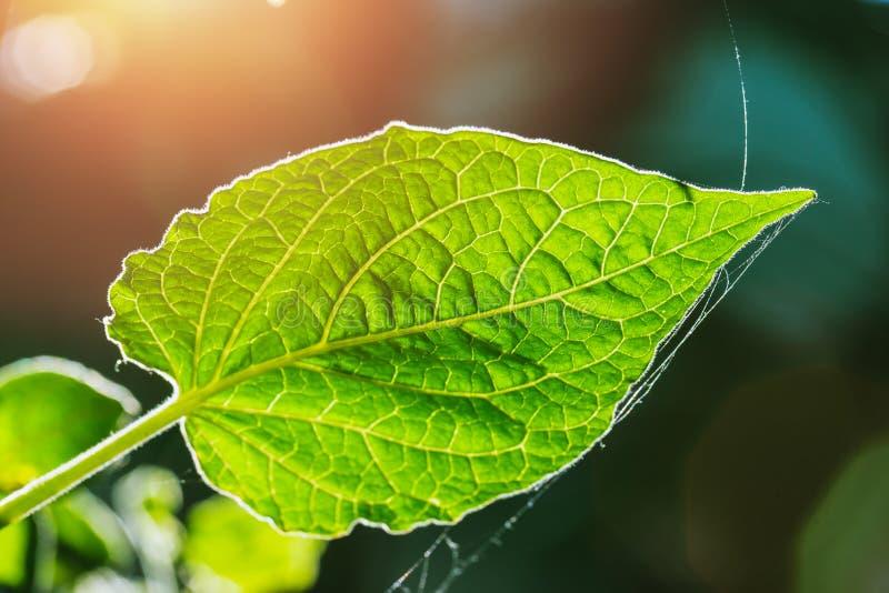 Vers groen blad op aardachtergrond stock afbeeldingen