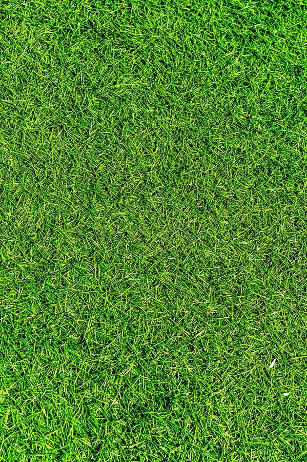 Vers groen gras. stock afbeeldingen