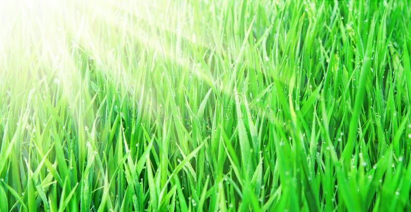 Vers groen gras stock foto's