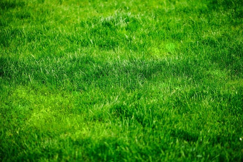 Vers groen gras royalty-vrije stock fotografie