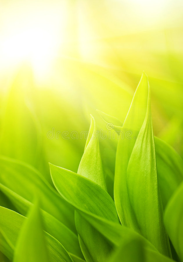 Vers groen gras royalty-vrije stock afbeelding