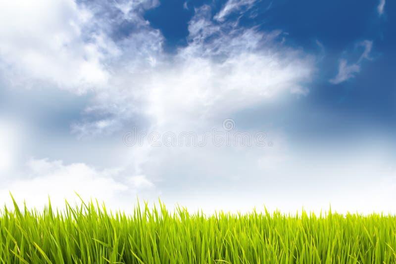 Vers groen gras als kadergrens met vreedzame blauwe hemel en witte wolken op een zonnige dagachtergrond royalty-vrije stock foto's