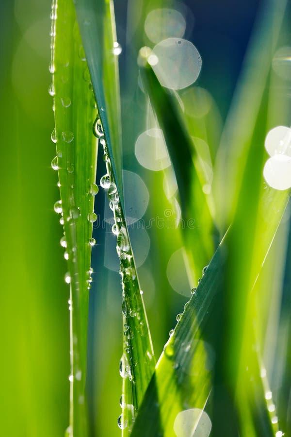 Vers groen gras met dauw stock foto