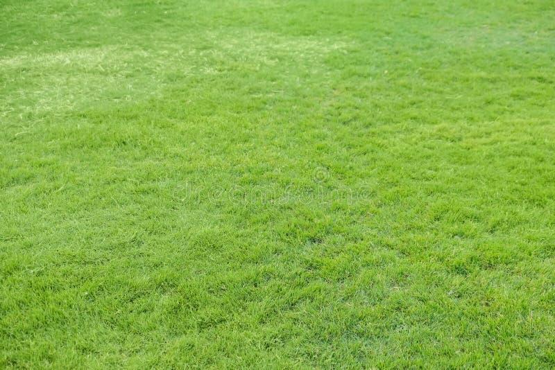 Vers groen gras op gazon stock foto