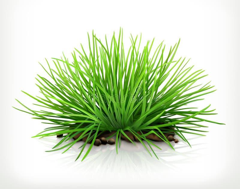 Vers groen gras, vectorpictogram royalty-vrije illustratie