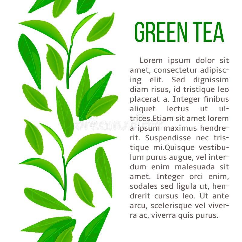 Vers Groen theebladen en takje verticale streep en beschrijvingstekst vector illustratie