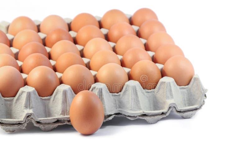 Vers Hen Eggs in document dienblad op witte achtergrond royalty-vrije stock foto's