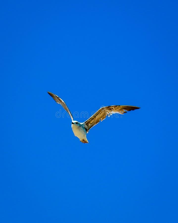 Vers le haut de dans le ciel photographie stock libre de droits
