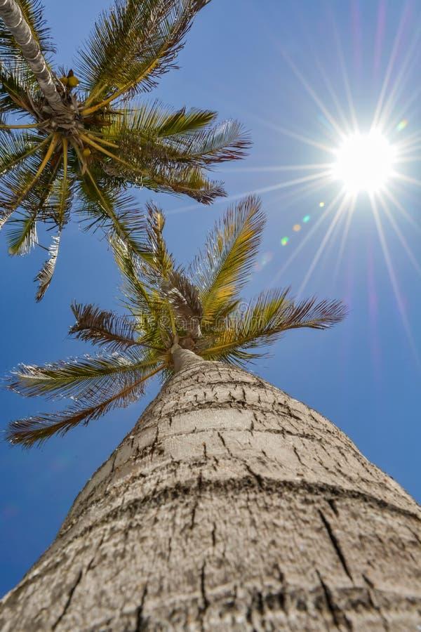 Vers le haut de la vue d'un palmier un beau jour photographie stock libre de droits