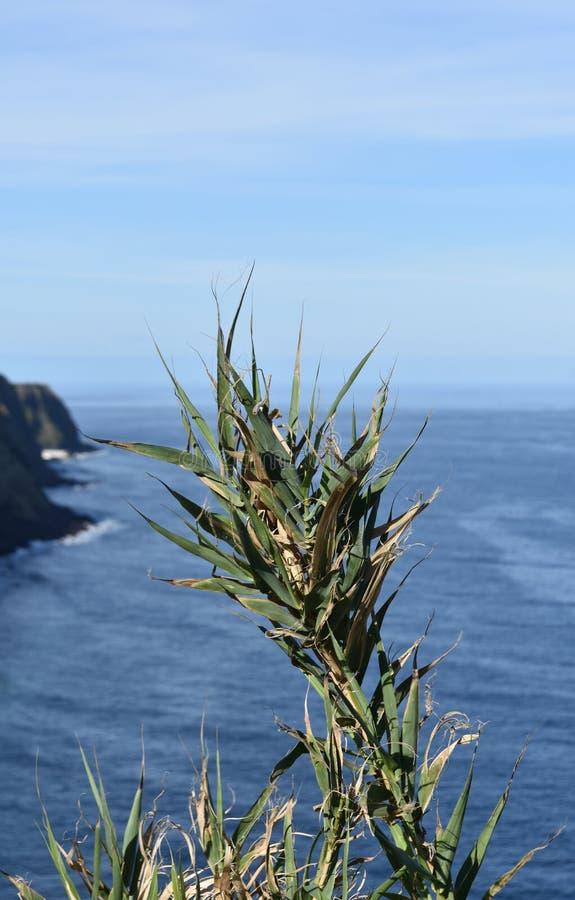 Vers le haut du regard étroit à une tige grande avec des lames d'herbe image libre de droits