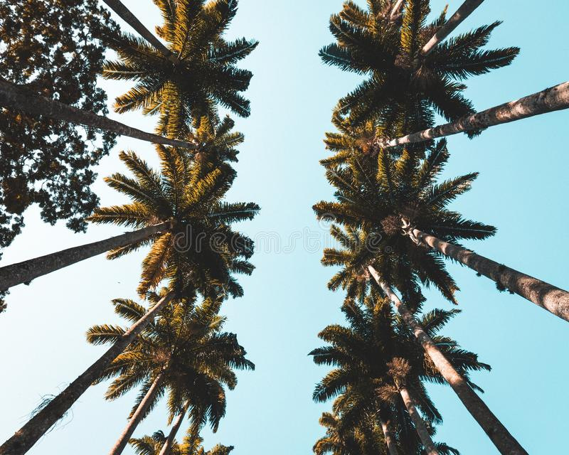 Vers le haut du tir de belles paumes tropicales dans une ville côtière photos libres de droits