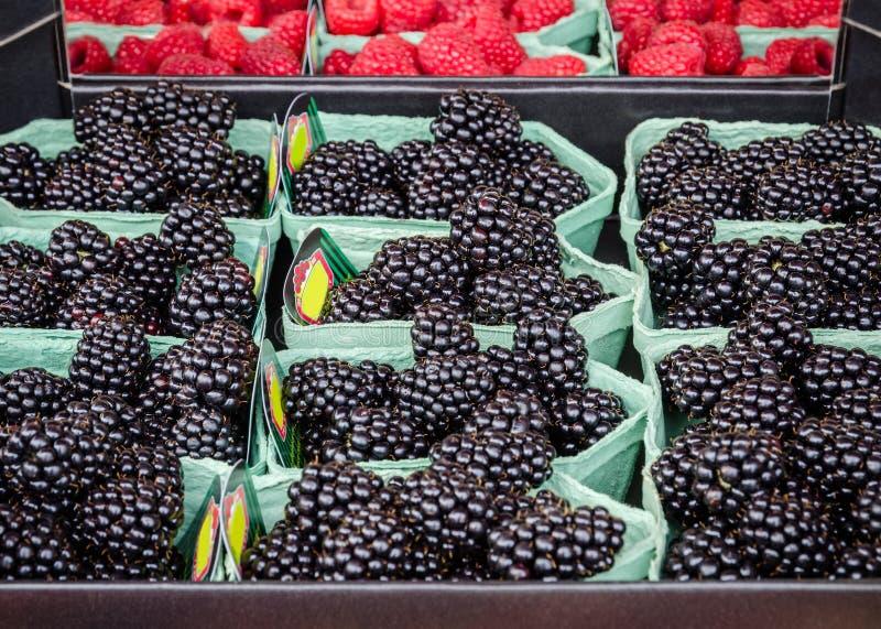 Vers maak geassorteerde braambessen voor verkoop bij lokale landbouwbedrijfmarkt schoon royalty-vrije stock afbeelding