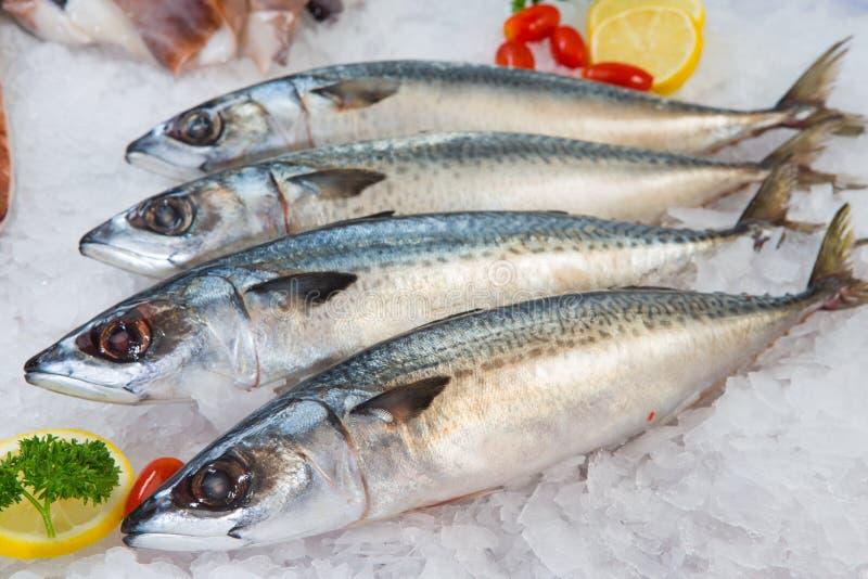 Vers Makreel of Saba Fish op ijs in markt royalty-vrije stock afbeeldingen