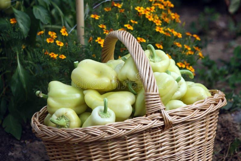 Vers peperfruit van moestuin royalty-vrije stock foto