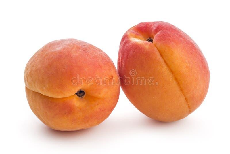 Vers riped abrikozen stock afbeelding