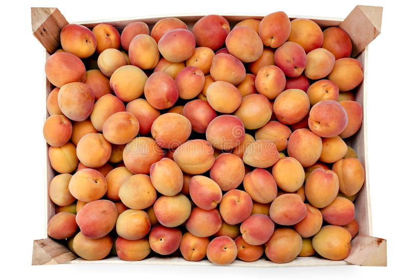 Vers riped abrikozen royalty-vrije stock afbeelding