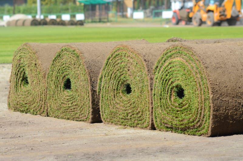 Vers rollen-omhooggaand grasgras stock afbeelding