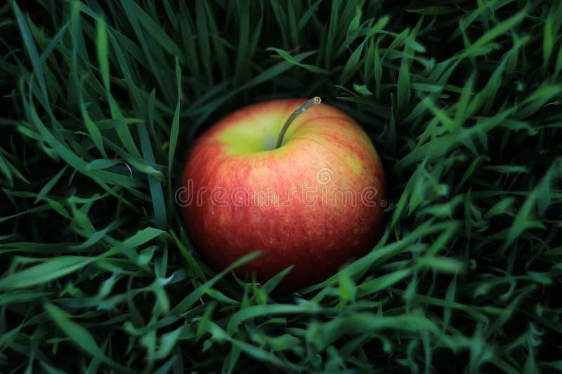 Vers rood appelfruit op groen gras in de gezonde tuin, en royalty-vrije stock afbeeldingen