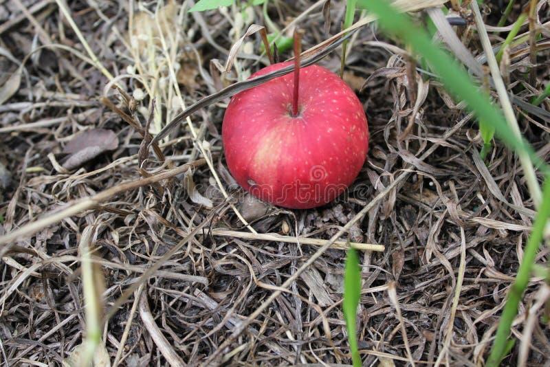Vers rood appelfruit op groen gras i20503 royalty-vrije stock foto's