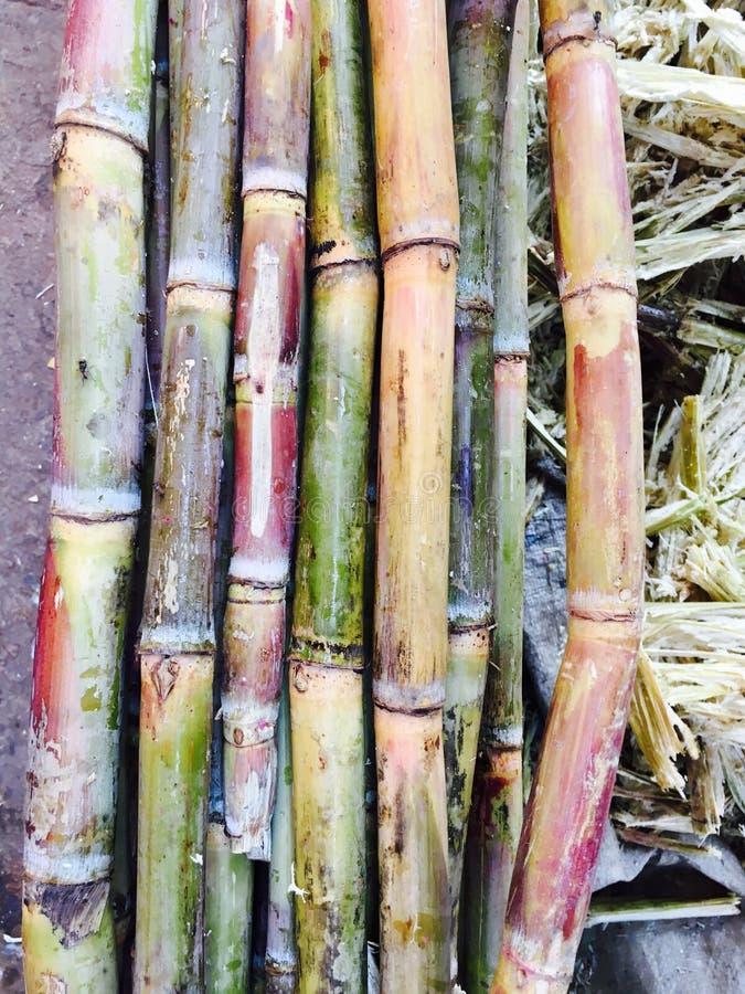 Vers Sugar Cane stock afbeeldingen