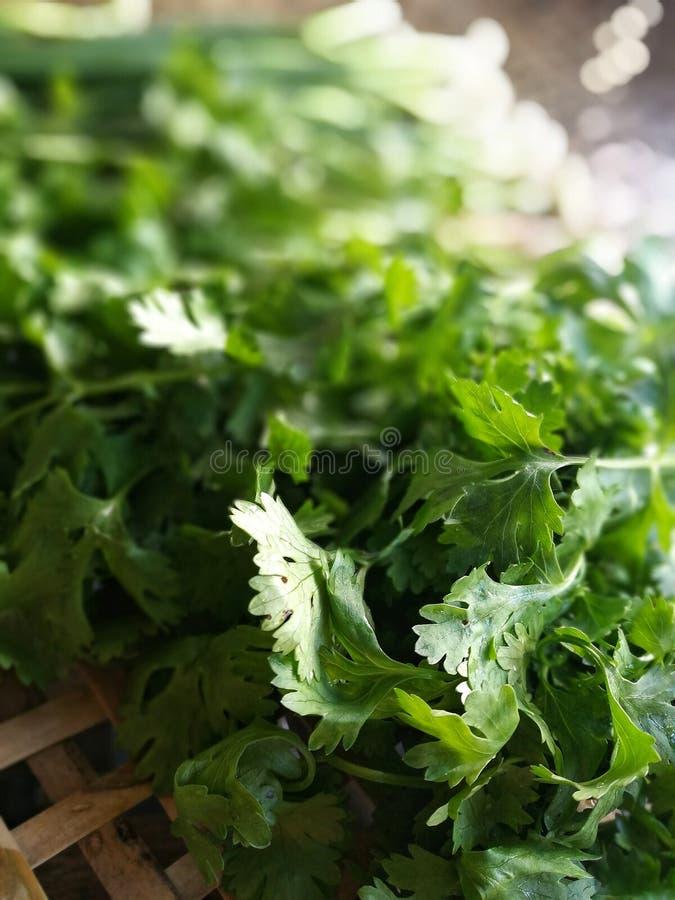 vers voedsel vegetable royalty-vrije stock foto